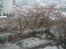201004yuki1.jpg