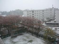 201004yuki2.jpg