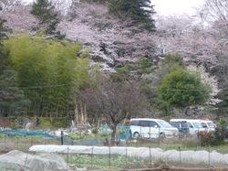 2010akebonoyama1.jpgのサムネール画像